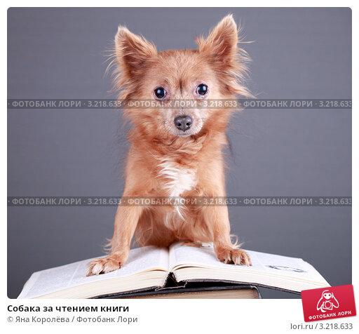Купить «Собака за чтением книги», эксклюзивное фото № 3218633, снято 18 июля 2018 г. (c) Яна Королёва / Фотобанк Лори