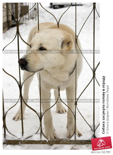 Купить «Собака засунула голову в ограду», фото № 32701, снято 25 февраля 2006 г. (c) Ольга Шаран / Фотобанк Лори