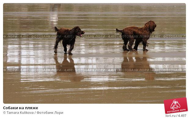 Собаки на пляже , фото № 4497, снято 4 июня 2006 г. (c) Tamara Kulikova / Фотобанк Лори