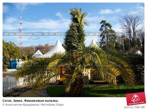 Сочи. Зима. Финиковая пальма., фото № 189145, снято 26 октября 2006 г. (c) Константин Бредников / Фотобанк Лори