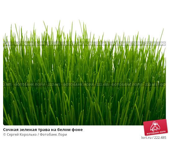 Сочная зеленая трава на белом фоне, фото № 222485, снято 17 января 2017 г. (c) Сергей Королько / Фотобанк Лори