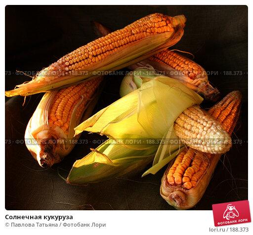 Солнечная кукуруза, фото № 188373, снято 25 августа 2007 г. (c) Павлова Татьяна / Фотобанк Лори