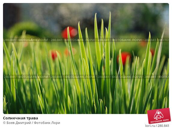 Солнечная трава, фото № 280841, снято 5 мая 2008 г. (c) Боев Дмитрий / Фотобанк Лори