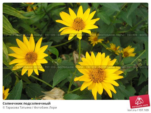 Солнечник подсолнечный, фото № 197109, снято 24 июля 2007 г. (c) Тарасова Татьяна / Фотобанк Лори
