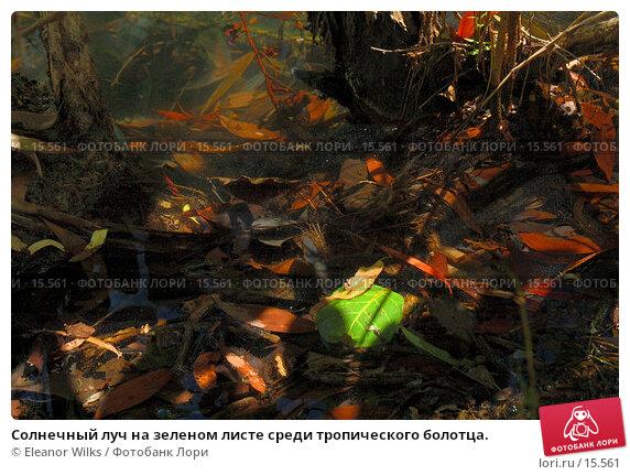 Солнечный луч на зеленом листе среди тропического болотца., фото № 15561, снято 8 января 2007 г. (c) Eleanor Wilks / Фотобанк Лори