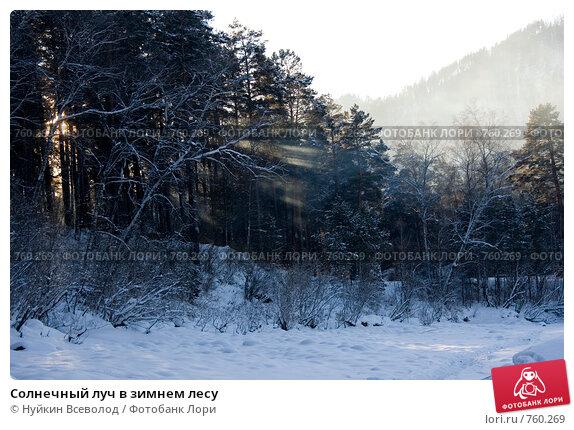 Солнечный луч в зимнем лесу. Стоковое фото, фотограф Нуйкин Всеволод / Фотобанк Лори