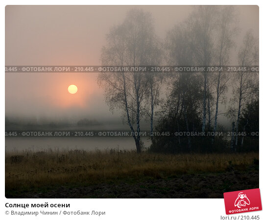 Купить «Солнце моей осени», эксклюзивное фото № 210445, снято 7 сентября 2007 г. (c) Владимир Чинин / Фотобанк Лори