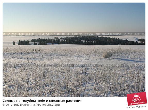 Солнце на голубом небе и снежные растения, фото № 51757, снято 29 ноября 2006 г. (c) Останина Екатерина / Фотобанк Лори