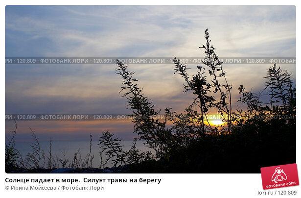 Солнце падает в море.  Силуэт травы на берегу, эксклюзивное фото № 120809, снято 21 ноября 2006 г. (c) Ирина Мойсеева / Фотобанк Лори