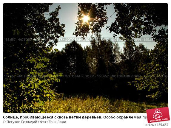 """Солнце, пробивающееся сквозь ветви деревьев. Особо охраняемая природная территория """"Битцевский лес"""", фото № 155657, снято 4 сентября 2007 г. (c) Петухов Геннадий / Фотобанк Лори"""