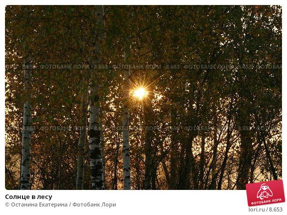 Солнце в лесу, фото № 8653, снято 1 октября 2005 г. (c) Останина Екатерина / Фотобанк Лори