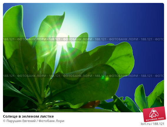 Солнце в зеленом листке, фото № 188121, снято 4 декабря 2016 г. (c) Парушин Евгений / Фотобанк Лори