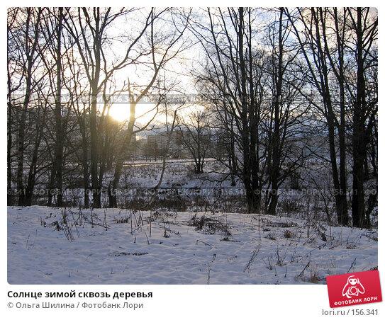 Купить «Солнце зимой сквозь деревья», фото № 156341, снято 20 декабря 2007 г. (c) Ольга Шилина / Фотобанк Лори
