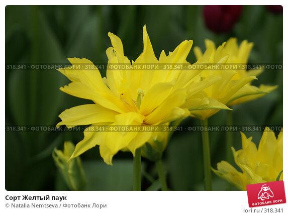 Сорт Желтый паук, эксклюзивное фото № 318341, снято 8 апреля 2008 г. (c) Natalia Nemtseva / Фотобанк Лори