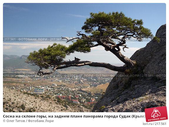 Сосна на склоне горы, на заднем плане панорама города Судак (Крым), фото № 217561, снято 18 сентября 2006 г. (c) Олег Титов / Фотобанк Лори