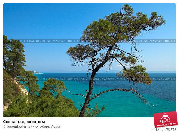 Сосна над  океаном, фото № 176573, снято 8 мая 2006 г. (c) Бабенко Денис Юрьевич / Фотобанк Лори