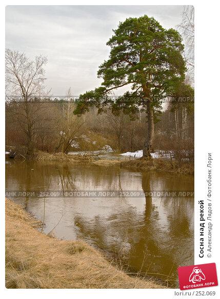 Сосна над рекой, фото № 252069, снято 12 апреля 2008 г. (c) Александр Лядов / Фотобанк Лори