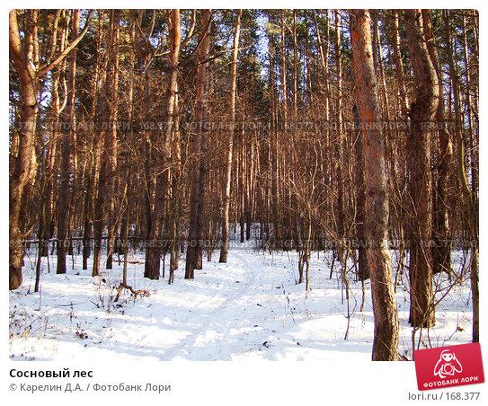 Сосновый лес, фото № 168377, снято 5 января 2008 г. (c) Карелин Д.А. / Фотобанк Лори