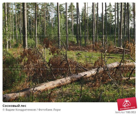 Сосновый лес, фото № 180953, снято 24 октября 2016 г. (c) Вадим Кондратенков / Фотобанк Лори