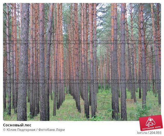 Сосновый лес, фото № 204093, снято 28 июля 2006 г. (c) Юлия Селезнева / Фотобанк Лори