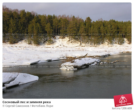 Сосновый лес и зимняя река, фото № 200609, снято 3 февраля 2008 г. (c) Сергей Самсонов / Фотобанк Лори