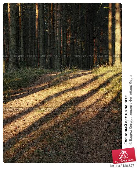 Купить «Сосновый лес на закате», фото № 180877, снято 22 марта 2018 г. (c) Вадим Кондратенков / Фотобанк Лори