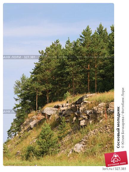Сосновый молодняк, фото № 327381, снято 28 июля 2007 г. (c) Юлия Бочкарева / Фотобанк Лори