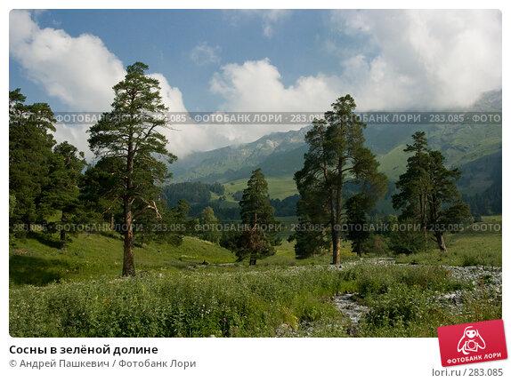 Сосны в зелёной долине, фото № 283085, снято 23 июля 2007 г. (c) Андрей Пашкевич / Фотобанк Лори