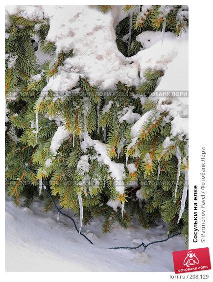 Сосульки на елке, фото № 208129, снято 19 февраля 2008 г. (c) Parmenov Pavel / Фотобанк Лори