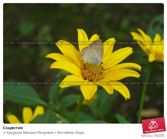 Купить «Соцветие», фото № 74373, снято 1 августа 2005 г. (c) Кукуруза Михаил Петрович / Фотобанк Лори