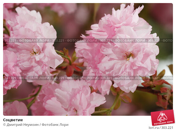 Соцветие, эксклюзивное фото № 303221, снято 22 апреля 2008 г. (c) Дмитрий Неумоин / Фотобанк Лори