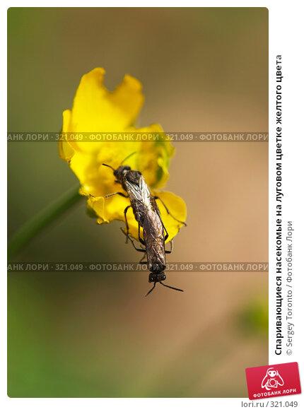 Спаривающиеся насекомые на луговом цветке желтого цвета, фото № 321049, снято 1 мая 2008 г. (c) Sergey Toronto / Фотобанк Лори