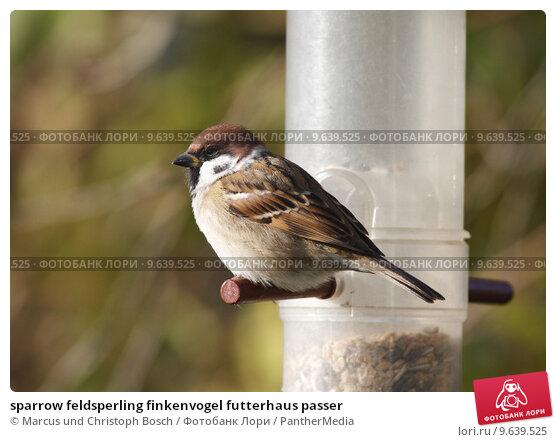 Sparrow Feldsperling Finkenvogel Futterhaus Passer купить фото