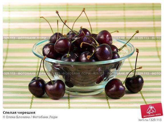Купить «Спелая черешня», фото № 329113, снято 20 июня 2008 г. (c) Елена Блохина / Фотобанк Лори