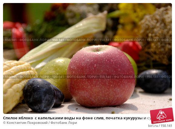 Спелое яблоко  с капельками воды на фоне слив, початка кукурузы и сушеных трав, фото № 150141, снято 19 августа 2007 г. (c) Константин Покровский / Фотобанк Лори