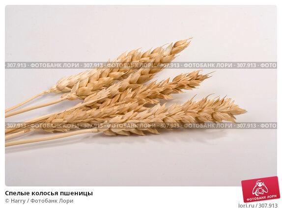 Спелые колосья пшеницы, фото № 307913, снято 10 января 2008 г. (c) Harry / Фотобанк Лори