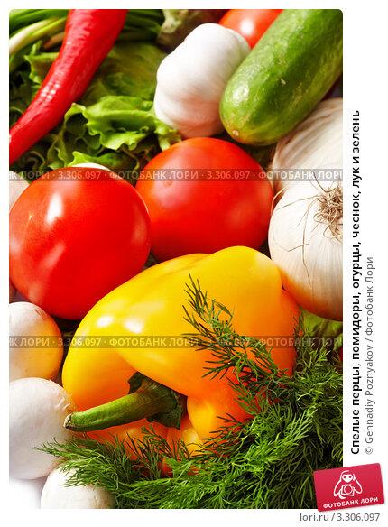 Купить «Спелые перцы, помидоры, огурцы, чеснок, лук и зелень», фото № 3306097, снято 10 декабря 2009 г. (c) Gennadiy Poznyakov / Фотобанк Лори