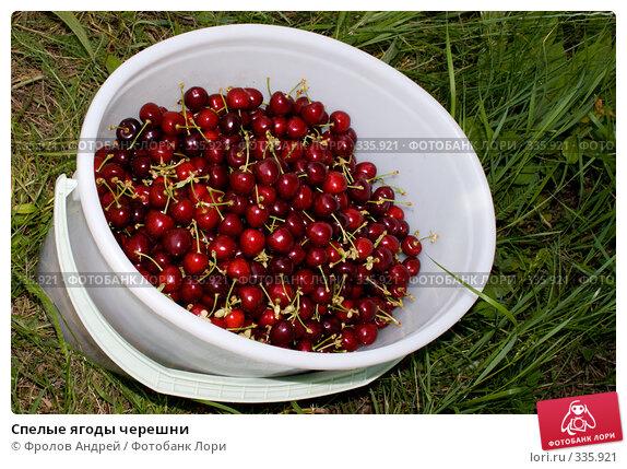 Спелые ягоды черешни, фото № 335921, снято 13 июня 2008 г. (c) Фролов Андрей / Фотобанк Лори