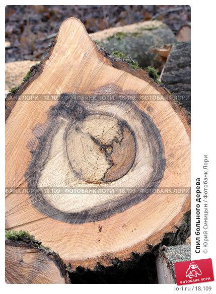 Спил больного дерева, фото № 18109, снято 14 января 2007 г. (c) Юрий Синицын / Фотобанк Лори