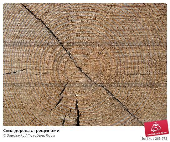 Спил дерева с трещинами, фото № 265973, снято 19 апреля 2008 г. (c) Заноза-Ру / Фотобанк Лори