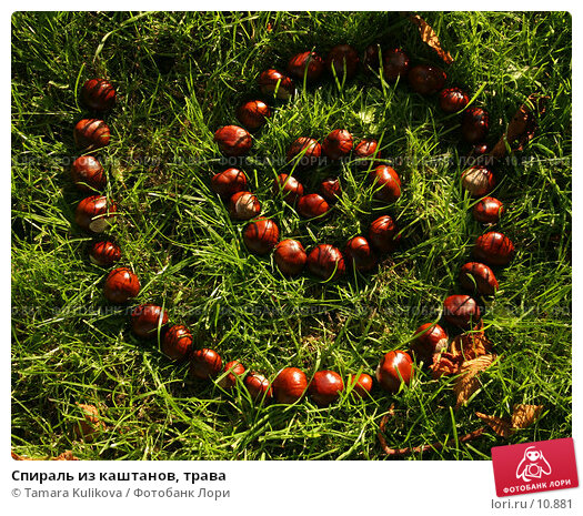 Купить «Спираль из каштанов, трава», фото № 10881, снято 8 октября 2006 г. (c) Tamara Kulikova / Фотобанк Лори