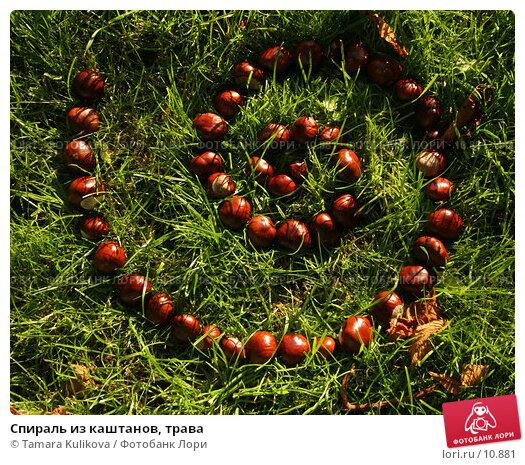 Спираль из каштанов, трава, фото № 10881, снято 8 октября 2006 г. (c) Tamara Kulikova / Фотобанк Лори
