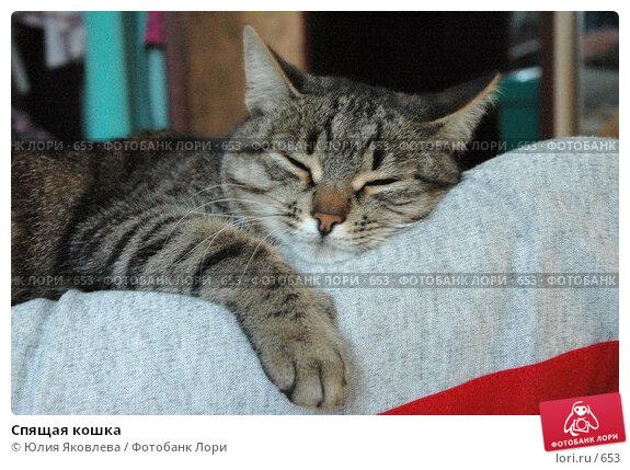 Спящая кошка, фото № 653, снято 6 марта 2005 г. (c) Юлия Яковлева / Фотобанк Лори