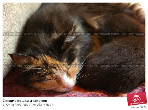 Купить «Спящие кошка и котенок », фото № 685, снято 3 июня 2005 г. (c) Юлия Яковлева / Фотобанк Лори