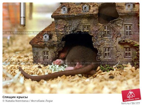 Спящие крысы, эксклюзивное фото № 59177, снято 19 апреля 2007 г. (c) Natalia Nemtseva / Фотобанк Лори