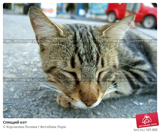 Спящий кот, фото № 107005, снято 28 сентября 2007 г. (c) Корчагина Полина / Фотобанк Лори