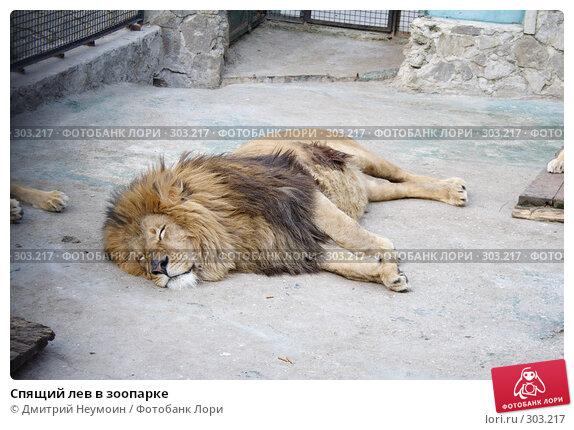 Спящий лев в зоопарке, эксклюзивное фото № 303217, снято 26 апреля 2008 г. (c) Дмитрий Неумоин / Фотобанк Лори