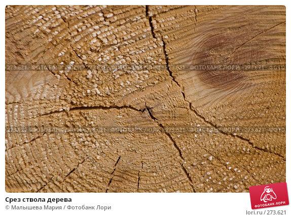 Купить «Срез ствола дерева», фото № 273621, снято 27 апреля 2008 г. (c) Малышева Мария / Фотобанк Лори