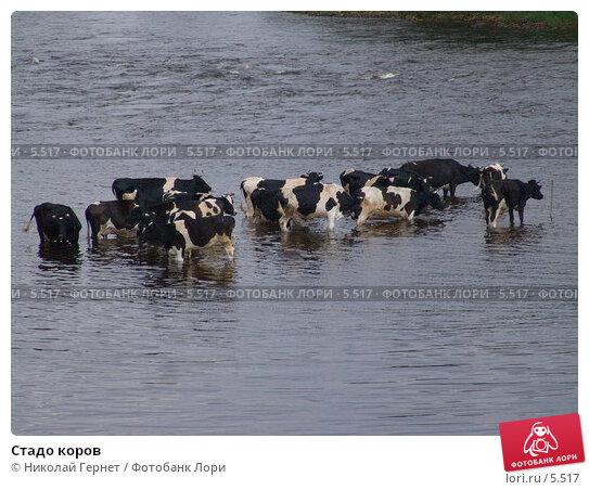 Стадо коров, фото № 5517, снято 19 июля 2005 г. (c) Николай Гернет / Фотобанк Лори