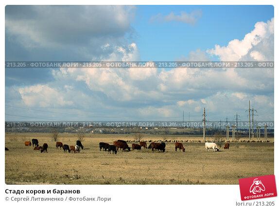 Купить «Стадо коров и баранов», фото № 213205, снято 3 марта 2008 г. (c) Сергей Литвиненко / Фотобанк Лори